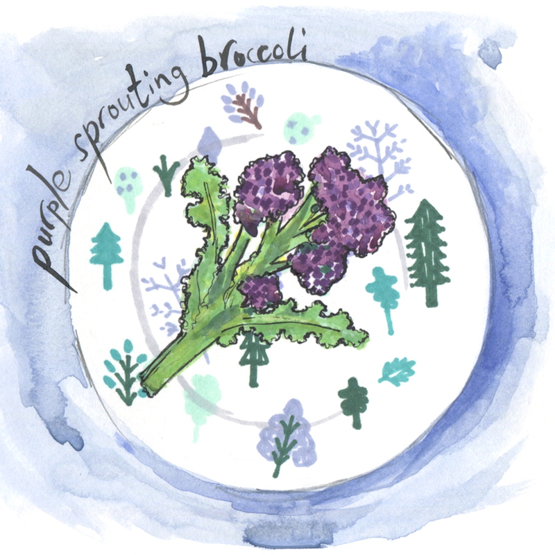 seasonal 2 - purple sprouting broccoli